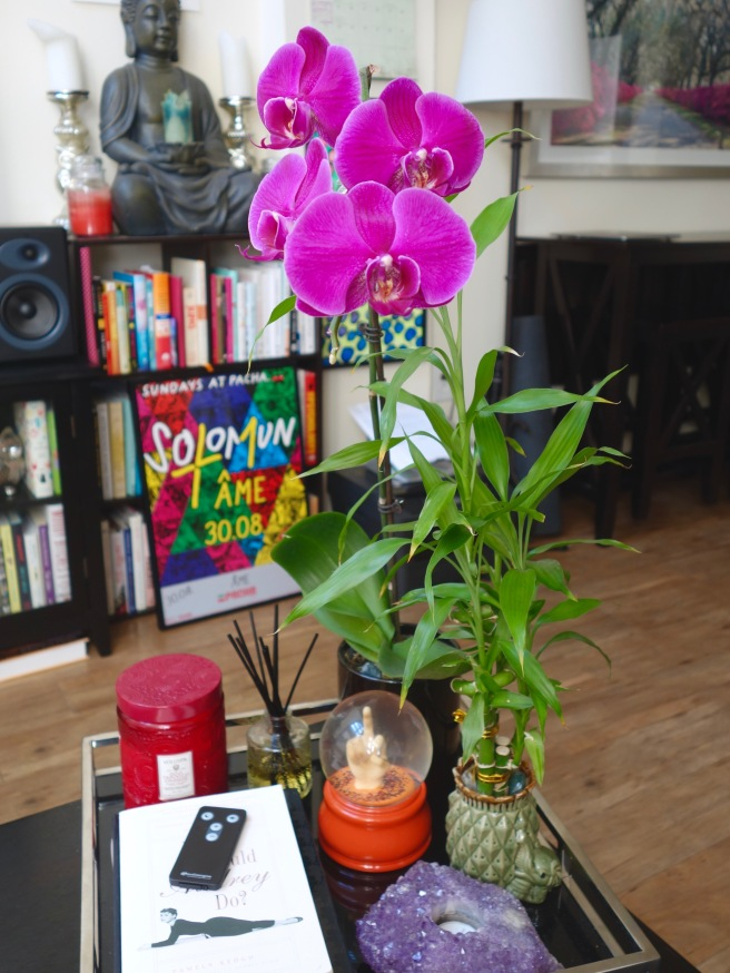 how-to-care-for-orchids-stonecoldbetch