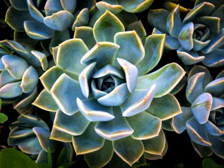 How To Care For Succulents & Keep Them Alive