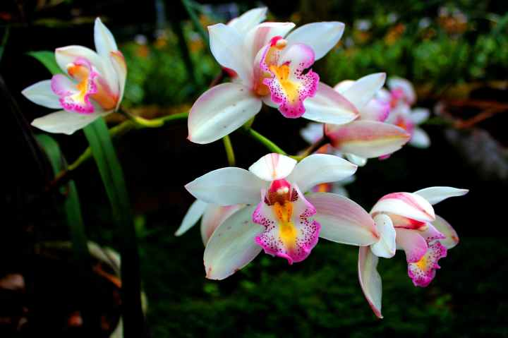 How To Keep Orchids Alive: Care Tips &Tricks